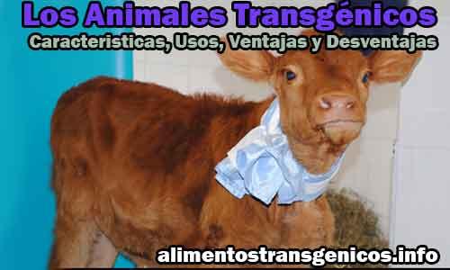 Los Animales Transgénicos Caracteristicas, Usos, Ventajas y Desventajas