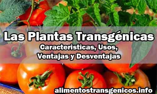 Las Plantas Transgénicas Caracteristicas, Usos, Ventajas y Desventajas