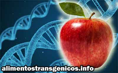 cuáles son los alimentos transgénicos