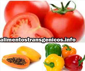 plantas transgénicas ejemplos