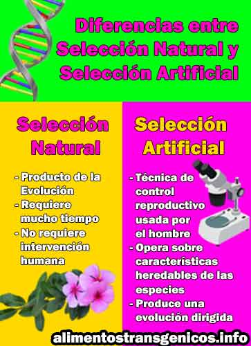 tipos de seleccion artificial
