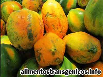 papaya transgenica resistente virus