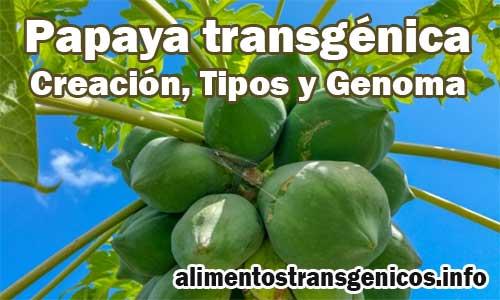 Papaya Transgénica Definición, Creación y Tipos