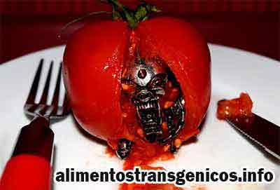 ventajas y desventajas del tomate transgenico