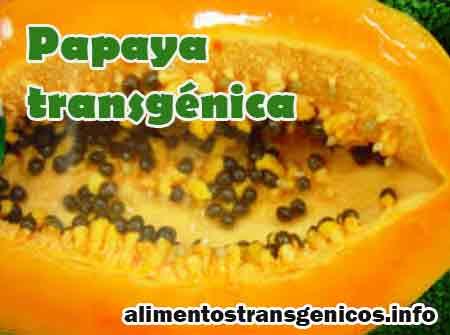 papaya transgenica caracteristicas