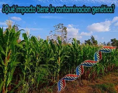 riesgos de la contaminacion genetica