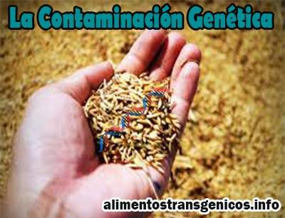 La Contaminación Genética Riesgos, Efectos, Como Prevenirla