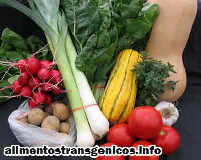 preguntas y respuestas sobre Alimentos transgenicos